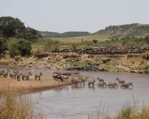 Great Migration in Kenia